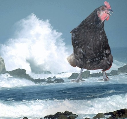 sea chicken pollution image greenprophet green prophet ministry of environmental protection in israel to clamp down on polluters