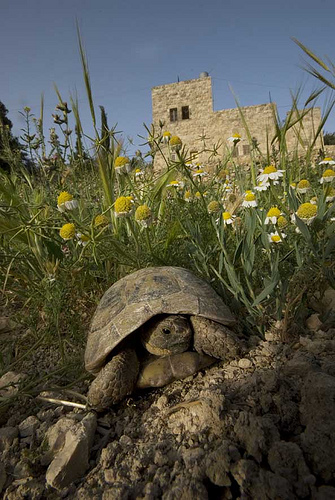 palestine permaculture project bustan turtle photo