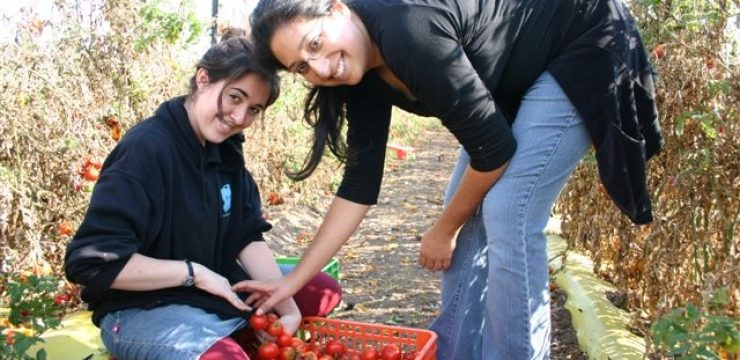 91232-gleaning-activism-center.jpg