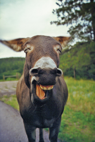 You're a donkey: Is this a good father's blessing?