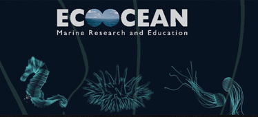 Environment Educator EcoOcean Shows NGOs How To Create Advertising: Campaign Save The Turtles