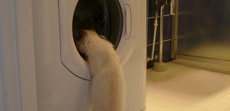 kitten-and-washing-machine.jpg