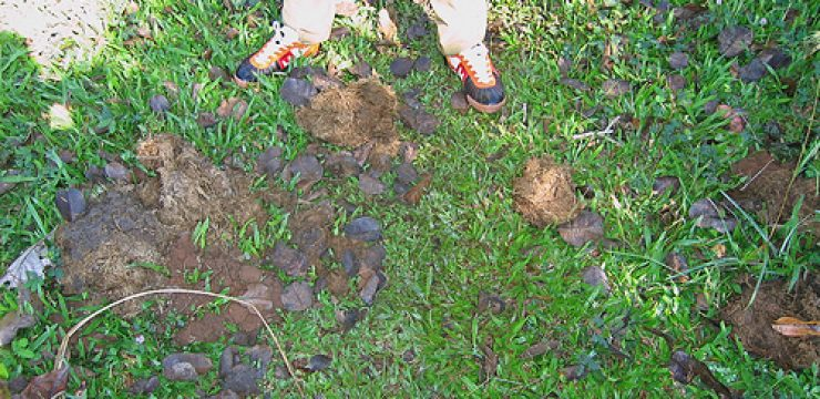 elephant-dung-compost-photo.jpg