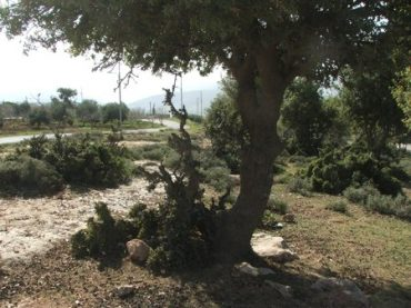 """""""Save the Forests"""" Campaign in Jordan to Stop Picnic Littering and Vandalism"""