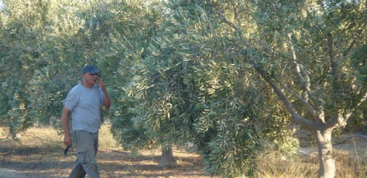 doron-checking-trees-irrigation-story.jpg