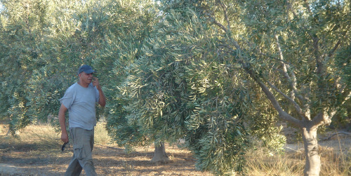 doron-checking-trees-irrigation-story