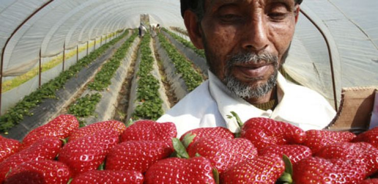 strawberry-west-bank.jpg