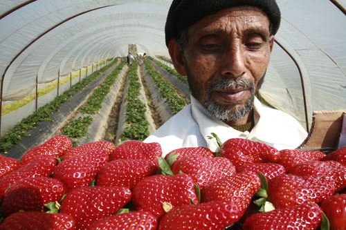 strawberry-west-bank