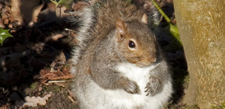 fat-squirrel.jpg