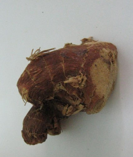 galangal root image
