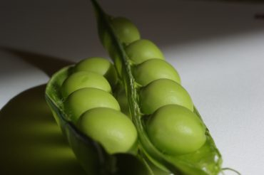 A New Solar Energy Source from the Common Pea