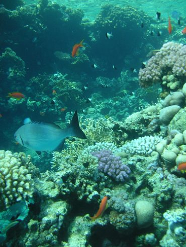Egypt Tries to Attract Eco-Tourists to Sharm el-Sheikh With Promises of Carbon Neutrality