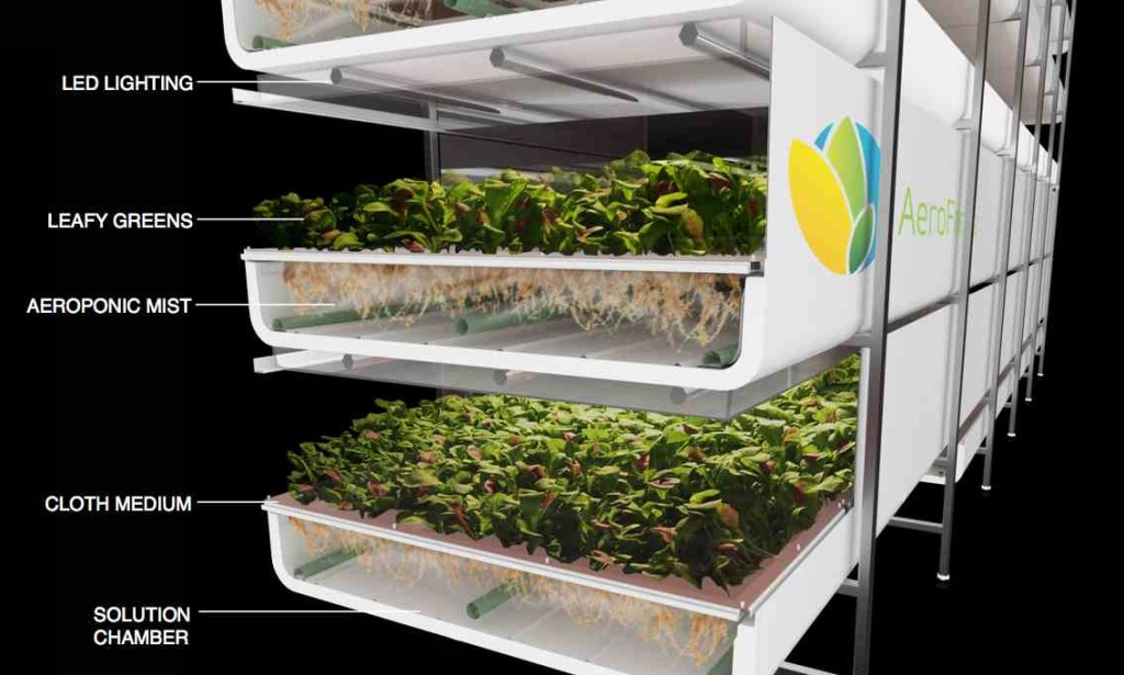 aerofarms vertical farm sprouts