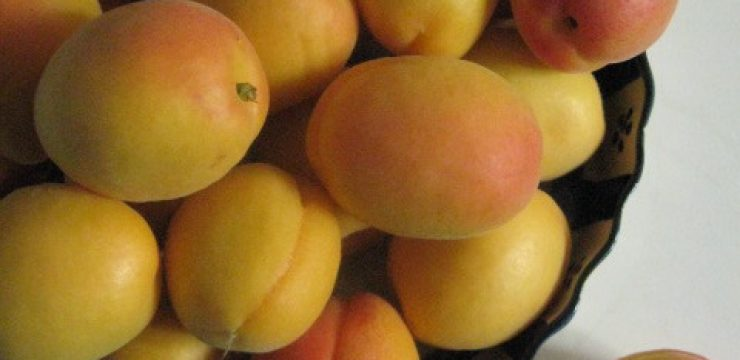 apricots-in-bowl-+-21.jpg