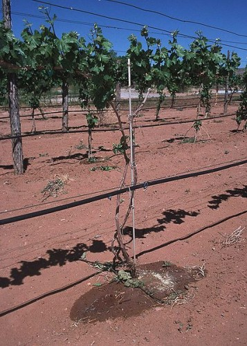 Queengil Provides Sensible Drip Irrigation Tape Drop by Drop