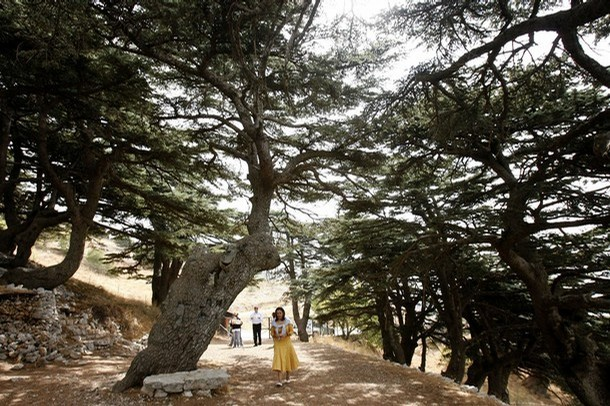 Foreign tourists walk in Al-Shouf Cedar Nature Reserve in the Shouf mount