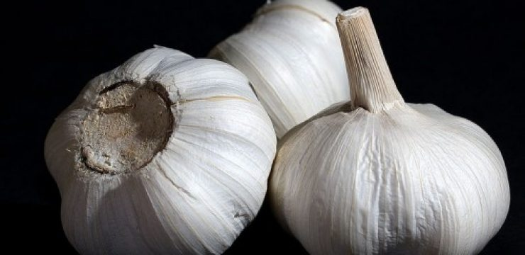 Garlic_Bulbs-500x333.jpg