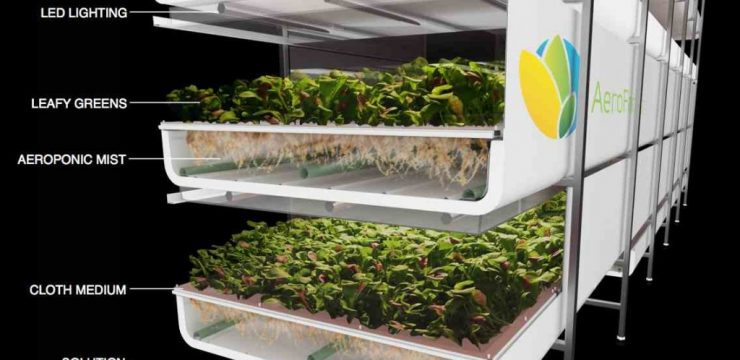 aerofarms-vertical-farm-sprouts-1024x6151.jpg