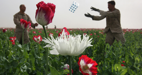 "Afghan Opium Growers Get ""The Burn Out"""