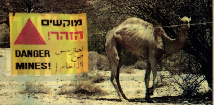Green Prophet of the Week: Avi Kuzi Is Israel's Animal Guardian Angel
