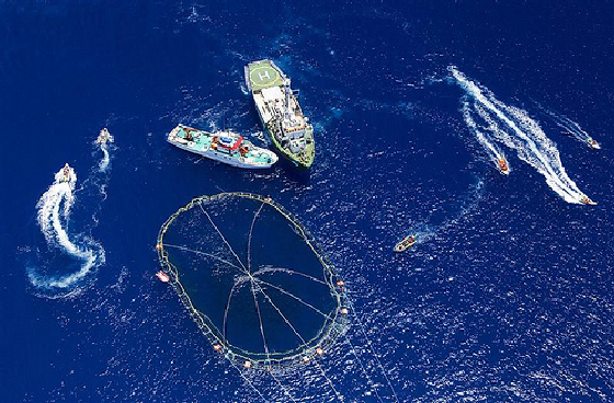 greenpeace tuna fishermen water boats photo aerial