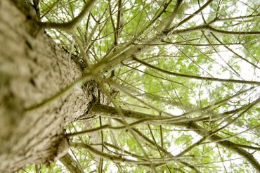 UN Fulfills Green Mission To Tree Plant in Middle East