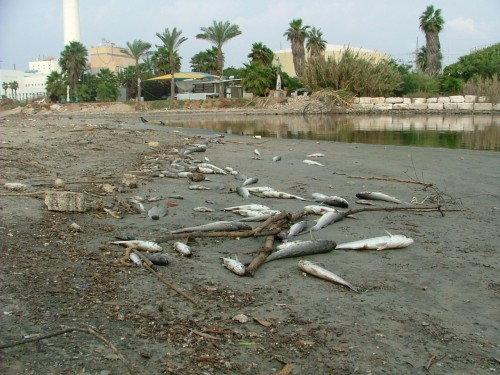 Catastrophic Chemical Spill Hits Israel's Yarkon River