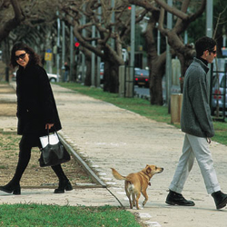 Knesset Environment Committee Starts Fighting for Urban Trees