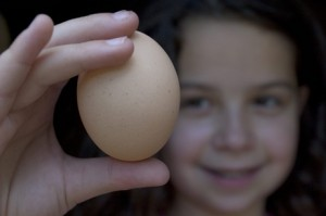 Israel's Organic Eggs: On the Political Edge?