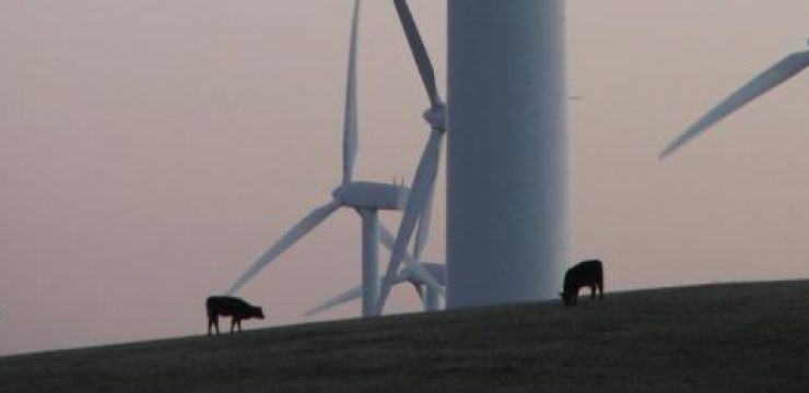 israel-cow-switzerland-energy.jpg