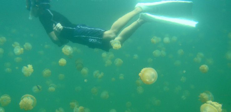 jeely-fish-jellyfish-israel-lebanon-photo1.jpg