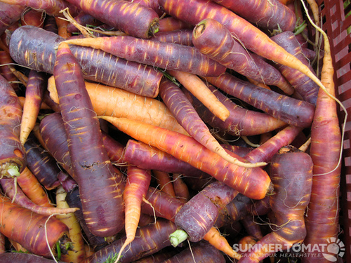 Originating In Ancient Egypt Carrots Didn T Start Out So Orange Can You Imagine How Bugs Bunny Would Look Chomping Down On One Of These