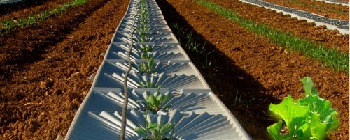 Tal Ya Water Irrigation Trays Make Water from Dew