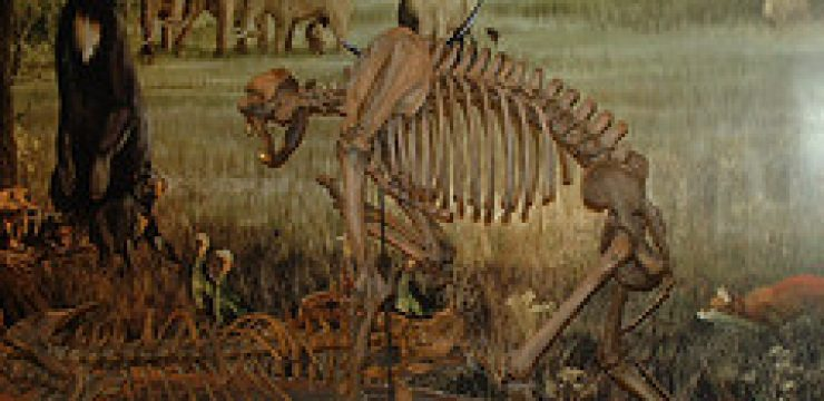 ancient-bear-skeleton.jpg