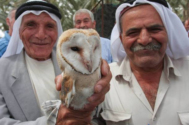 Owls Unite Arab Farmers in Palestine, Israel and Jordan