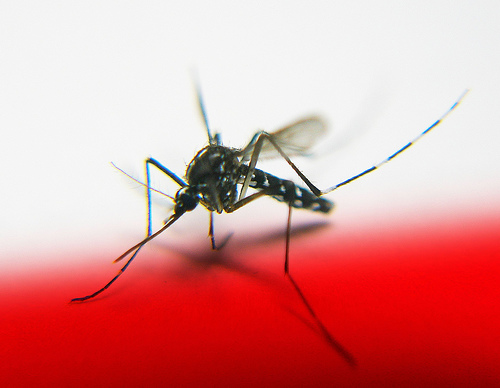 Plagued By Mosquitoes? Greenopolis Blog Offers Help