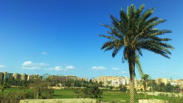 """""""Eco Options Egypt"""" Makes Egyptian Environmentalism Easy and Accessible"""