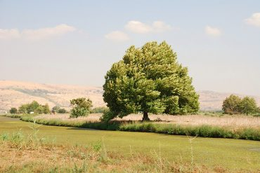 Hima: The Middle East's Tradition of Environmental Protection