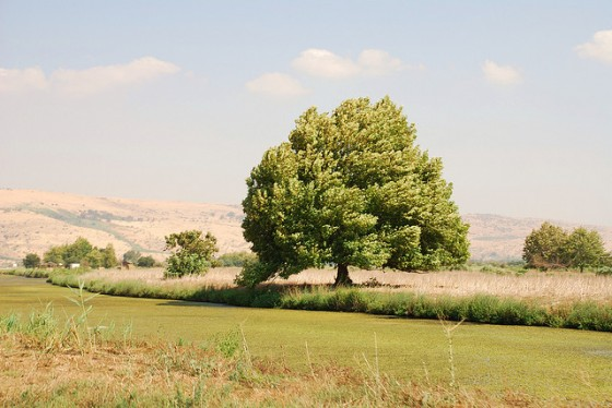 hima-middle-east-environment