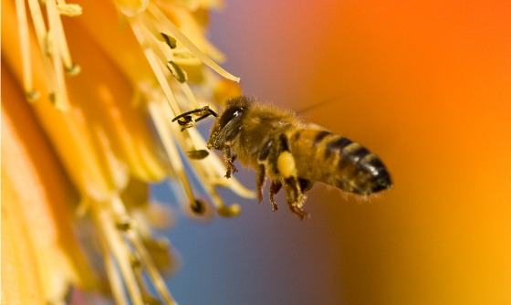 Bee-pollinating-flower