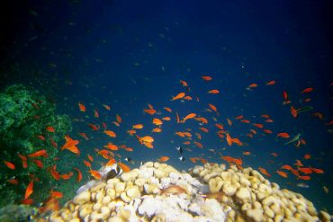 Dead Poisoned Fish Found in Red Sea
