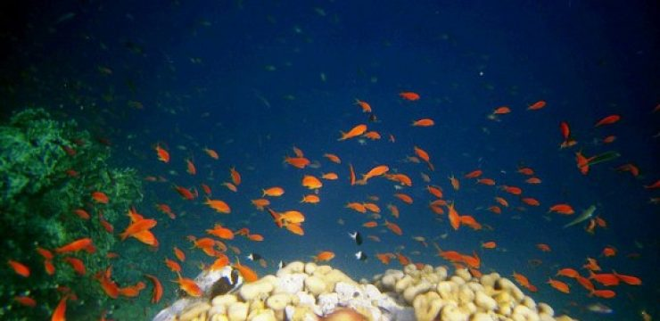 red-sea-fish.jpg