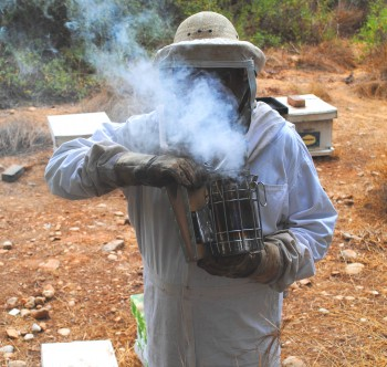 Visiting an apiary and getting swarmed | Green Prophet ...