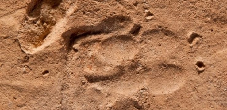 dog-roman-pawprint.jpg