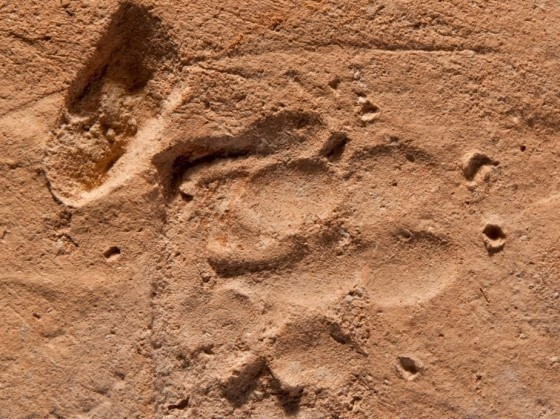 ancient roman paw print