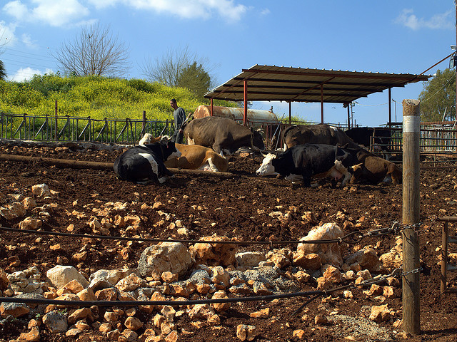Israeli Farmers Protest Lack of Imported Farm Help by Withholding Local Produce