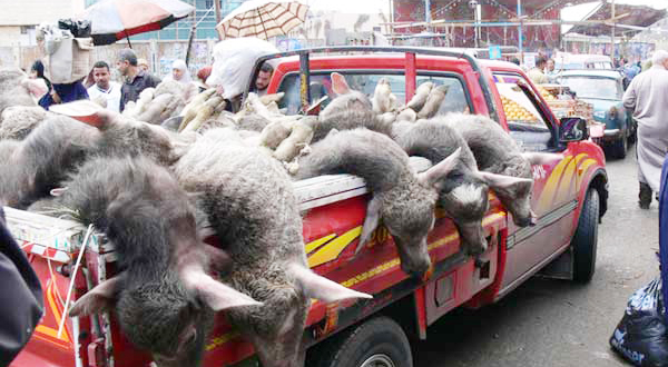 Egyptian Activists Claim Eid Animal Slaughter Is Haram