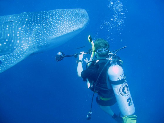 Mysterious Female Whale Sharks Elude Marine Biologists ...