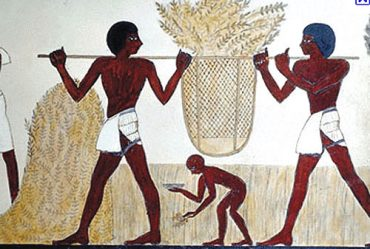Climate Change Killing the First Crops in the Cradle of Civilization