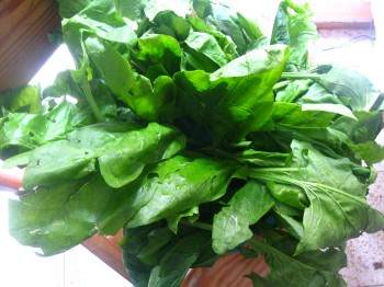 image-fresh-spinach